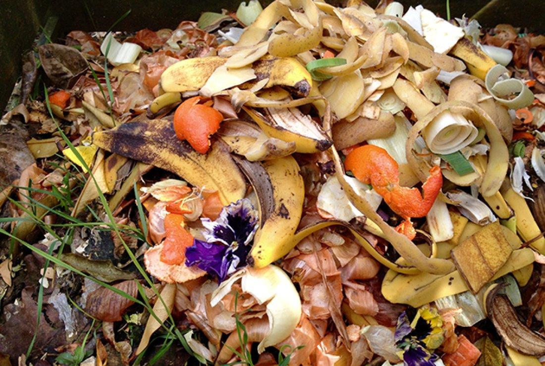 dechets-organiques - Photo